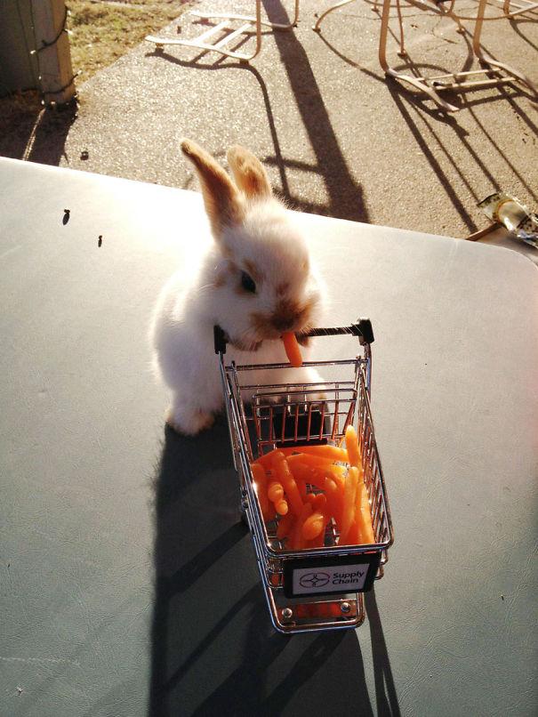 coelhos-mais-fofos-11