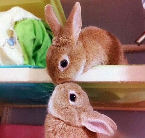 coelhos-mais-fofos-15