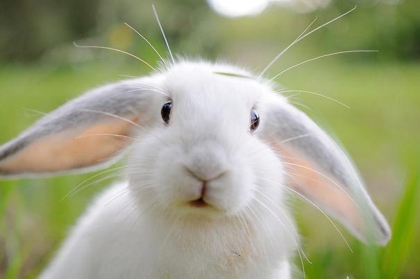 coelhos-mais-fofos-4